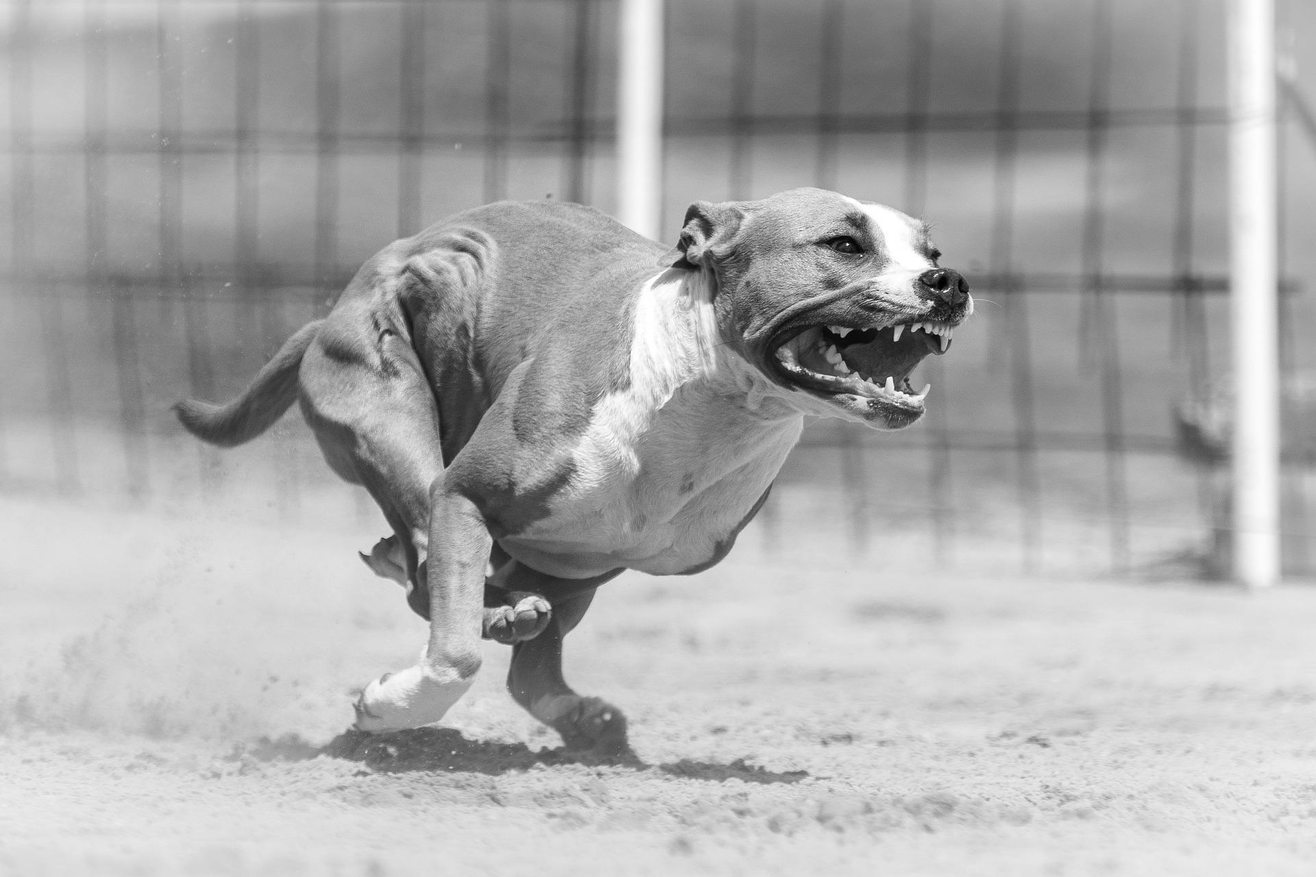 애완동물이 사람 다치게 하면.. 처벌 수위가..
